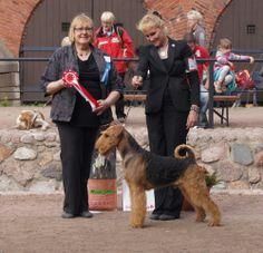 Hamina 2013. FCI 3: Big Lady's Iron Duke, Airedale Terrier