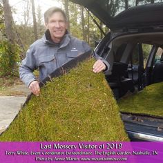 Moss For Sale, Living Walls, Nashville, Plant Wall