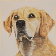 Osha De Hond Van Achterburen Uitgevoerd Met Polychromos Kleurpotloden Op Tekenpapier