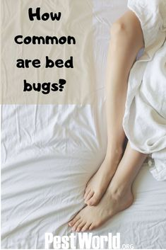 Pest control professionals are seeing a spike in summer bed bugs. Read about the threat of bed bugs this summer, courtesy of NPMA. Pest Management, Bed Bugs, Pest Control, Check, Bed Bugs Treatment