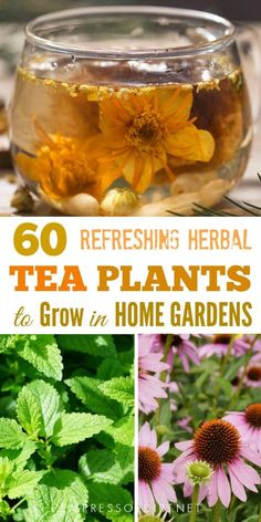Here's a list of herbal leaves flowers fruits seeds and roots to produce delicious homemade teas. Here's a list of herbal leaves flowers fruits seeds and roots to produce delicious homemade teas. Healing Herbs, Medicinal Plants, Herbal Plants, Gardening For Beginners, Gardening Tips, Pallet Gardening, Herbal Leaves, Tea Plant, Homemade Tea