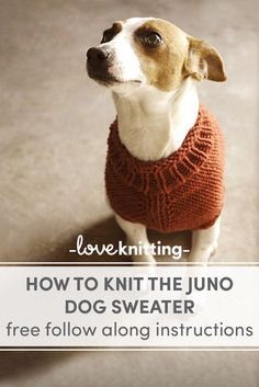 Knitting patterns free dog sweater yarns 51 Ideas for 2019 Knitted Dog Sweater Pattern, Dog Coat Pattern, Knit Dog Sweater, Crochet Pattern, Sewing Patterns Free Dog, Knitting Patterns For Dogs, Easy Knitting, Clothes Patterns, Goats In Sweaters