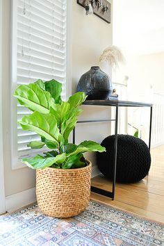 A front door makeover using a fiddle leaf fig.