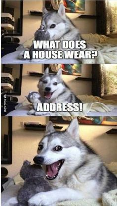 Super Funny And Cute Animal Pictures 033