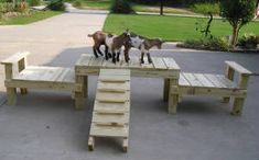 Great Goat playground ideas and more! (with pictures!)