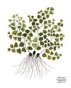 maidenhair fern botanical specimen giclee art print watercolor reproduction. $36.00, via Etsy.