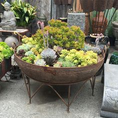 Large solid iron Kadai bowl planted with succulent arrangements. Iron stand incl… Large solid iron Kadai bowl planted with succulent arrangements. Originally used in north India as an oversized cooking pot. Tall Succulents, Hanging Succulents, Succulents In Containers, Container Plants, Container Gardening, Container Flowers, Indoor Gardening, Hanging Planters, Succulent Bowls