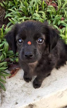 Pets. Cute dog. Have fun. Relax. Tips for a healthier life. Cute ladybug on puppy