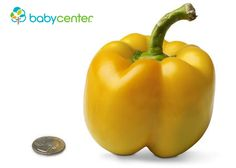 18 weeks: Your baby is as big as a bell pepper and weighs almost 7 ounces. (Length: 5 1/2 inches, head to bottom.) @babycenter #pregnancy #howbigisyourbaby