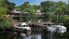 RiverGrille on the tomoka, Ormond Beach...Daytona, Florida...Fantastic food, friendly staff, and great atmosphere...You may even see an alligator.