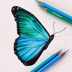 Blue Morpho butterfly – the start of a small piece. You might notice l get obses… Blue Morpho butterfly – the start of a small piece. You might notice l get obses…,Draw✏️ Blue Morpho. Easy Pencil Drawings, Pencil Drawings Of Flowers, Colored Pencil Artwork, Cool Art Drawings, Colorful Drawings, Art Drawings Sketches, Pencil Sketching, Horse Drawings, Drawing Faces