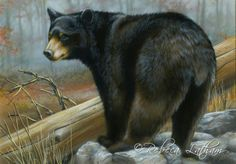 Autumn, 2010-11 Maryland Black Bear Conservation Stamp, 7in x 10in, watercolor on board, ©Rebecca Latham