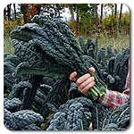 Organic Lacinato (Dinosaur) Kale