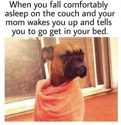 """30 Likes, 1 Comments - PersonalFitness3.com (@personalfitness3) on Instagram: """"When you fall comfortably #asleep on the #couch and your mom wakes you up and tells you to go get…"""""""