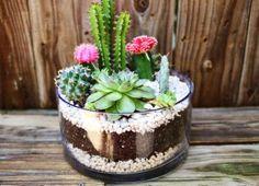 Como fazer um mini jardim em potes de vidro