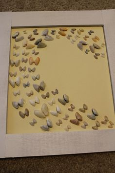 3 Ways to Frame & Display Sea Shells! | Charleston Crafted
