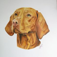 Maybe some of you like different drawings☺ I love Vizslas and have my own Velcro princess❤❤❤but I love drawing these amazing dogs as well! https://m.facebook.com/elenaruhrportraits/