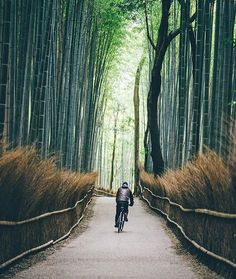 🚴🏼 Kyoto, Japan 📷 @edwardkb .... by @a.better.journey. #pic #picture #photos #photograph #foto #instaphoto #pictures #fotografia #color #capture #camera #moment #insta #pics #snapshot #사진 #all_shots #写真 #composition #фото #nice #good #day #lovely #perfect #passportready #getaway #instavacation #travelwriter #travelblogger #travelblog #traveltheworld #travelphoto #igtravel #travelbug #travelpics #travellife #traveladdict #travelingram #travelling #globetrotter #instapassport #traveller…