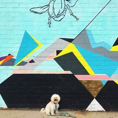 50 shades of blue that it's Monday  #mondayblues . . Edited using #AColorStory filter Pop Song . . . . #bichon #bichonfrise #fluffy #dogsofig #dogstagram  #buzzfeedanimals #bichonworld_feature #weeklyfluff #fluffybffz828  #ihaveathingforwalls #topdogphoto #woofandwalls #walltraveled  #betches #bitcheslovemurals #blues #teal #aqua #williamsburg #streetart #streetarteverywhere #mural #wallart  #streetart_official #nycstreetart#timeoutnewyork #newyorklike#nycmurals