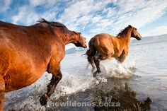 The Wild Horses of Botriver and Kleinmond