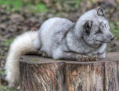 We start the week with this cute photograph it was taken by Tracey Laing at Northumberland Country Zoo in Morpeth. Use and to share your pictures with us for this week's gallery. Sutton Park, England Countryside, Picture Boards, British Wildlife, Image Caption, West Midlands, North Yorkshire, Cumbria, Nature Reserve