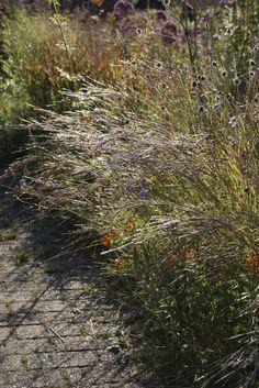 Oudolf Private Garden- Fall '14 | da Adam Woodruff