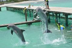 Jumping for joy in their new home at Dolphin Discovery Anguilla!    http://www.dolphindiscovery.com/anguilla/anguilla-location-overview.asp