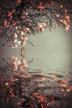 5) O que fazer com os sentimentos de raiva e medo? Saikawa Roshi – Sente-se calmamente e em silêncio. Faça zazen e, quando eles surgir...