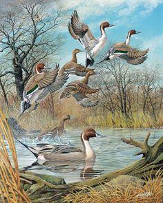 Image from http://c3131372.r72.cf0.rackcdn.com/FULL.20120105130915995.jpg.