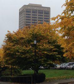 University of Washington! Beautiful campus :)