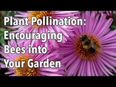 ▶ Plant Pollination - How to Encourage Pollinating Bees into Your Garden - YouTube