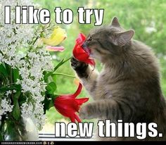 23 Cats Who Love Flowers So Much They Should Be Florists - Page 3 of 8 - The Cutest Kitties I Love Cats, Crazy Cats, Cool Cats, Animals And Pets, Funny Animals, Cute Animals, Wild Animals, Baby Animals, Beautiful Cats
