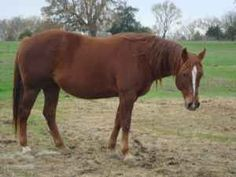 Rosa, my new broodmare, due in a month.