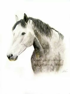 Soft pastels on card, I will be keeping this horse at home with me. I have a soft spot for dapple greys!  For your own personal piece of your four legged friend, please contact abigail.rose06@gmail.com or visit www.facebook.com/abigailrose.equineart