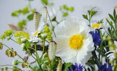 The Cut Flower Patch Gardenista: Sourcebook for Cultivated Living