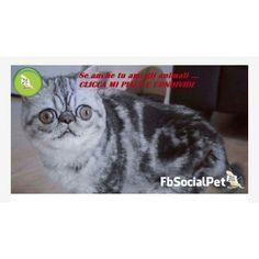 Hermam 🐈 gatto social dall'espressione spaventata 😱