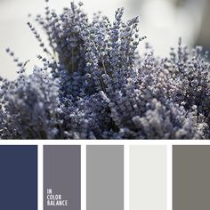 The color palette №1639 - silver-gray with Persian blue