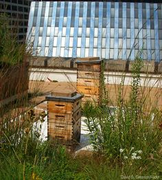 2 Ways to Split a Bee Colony - Expand your urban hive and give your bees some growing room with these two splitting methods.