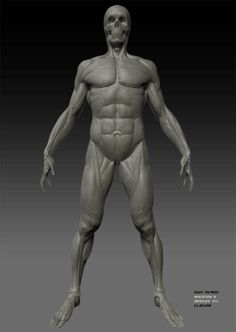 Full-body Male