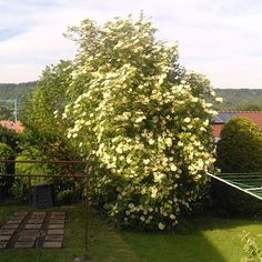 Mächtig viel Holundersirup u. -gelee dieses Jahr … :-.) Fruit, Plants, Pictures, Gelee, The Fruit, Flora, Plant, Planting