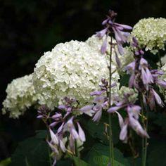 Le jardin blanc : le kit de 14 plantes  Plus une valeur qu'une couleur, le blanc symbolise la pureté, la paix, l'innocence, la vie.