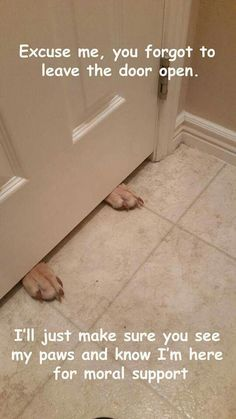 Typical Dobe thing if you close them out of the bathroom... :)