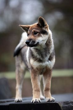 . #dog #puppy #dublindog