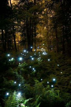 Fireflies. I've never seen them for real. The climate where I live is wrong.