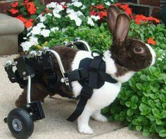 Bunny with wheels