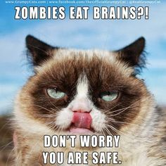 Grumpy cat memes to give you a laugh. You'll love grumpy cat even more. Grumpy Cat Quotes, Meme Grumpy Cat, Cat Memes, Grumpy Kitty, Funny Cat Fails, Funny Cat Videos, Funny Cats, Funny Animals, Cats Humor