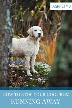 #QuickTip: Are you scared your dog might run away?