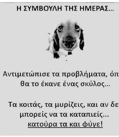 Memes, Dogs, Animals, Art, Art Background, Animales, Animaux, Meme, Pet Dogs