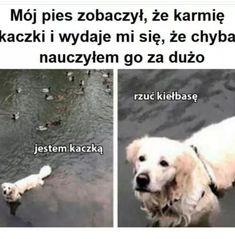 Wtf Funny, Funny Jokes, Hilarious, Funny Lyrics, Polish Memes, Weekend Humor, Komodo Dragon, Funny Mems, Quality Memes