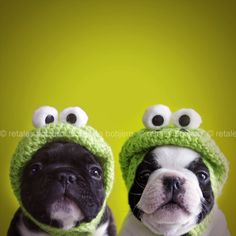not easy being green #funny #dogs #animals